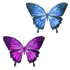 Watercolor illustration, set, image of colored transparent butterflies.
