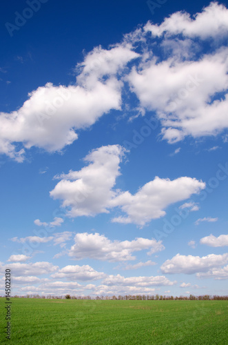 Trees on a background clouds