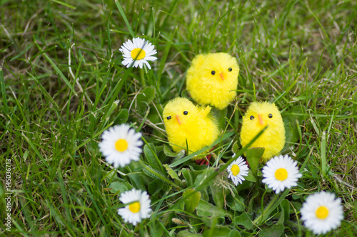 Easter chicks amongst daisy Poster