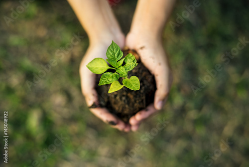 Foto Murales Hand holding sprout for growing nature