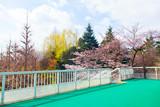 Tokyo bridge with colorful natural landscape | Pedestrian bridge at Shinanomachi station Japan on April 2, 2017