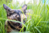 cat lie down on grass in the garden