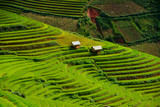 Terrace rice field of Mu Cang Chai on during sunrise, sunrise effact, Vietnam