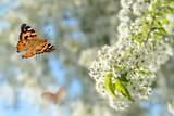Schmetterling 316