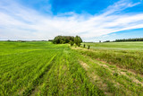 Vibrant green field landscape at spring, fresh green grass
