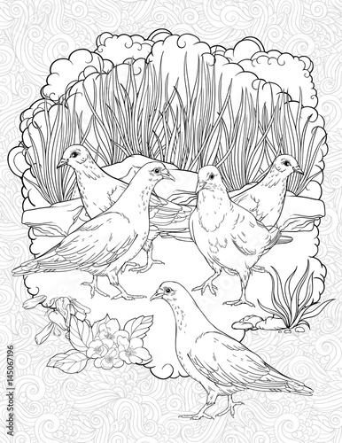 Five doves walking in a grass