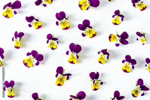 Pansy flowers, pattern of summer wildflowers on white background, overhead - 145069511