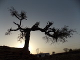 A VERY BEAUTIFUL LANDSCAPE OF SUN BEHIND A TREE ON THAR DESERT JAISALMER RAJASTHAN INDIA