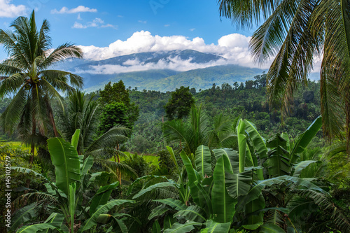 Fototapeta mount Halcon in the clouds,Mindoro island,Philippines