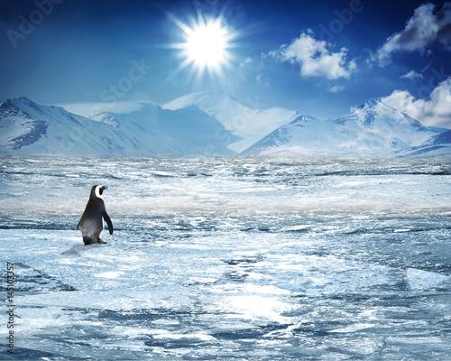 Fotobehang Pinguin #411804701