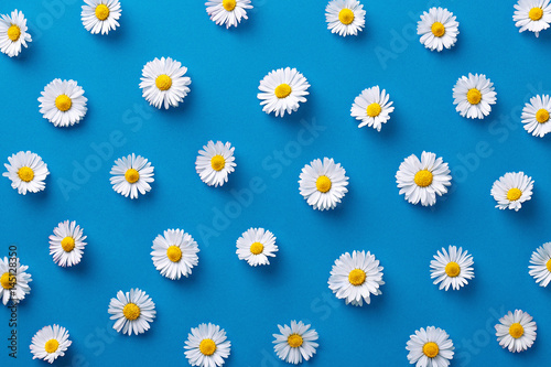 Daisy pattern. Flat lay spring and summer flowers on a blue background. Repeat concept. Top view - 145128350