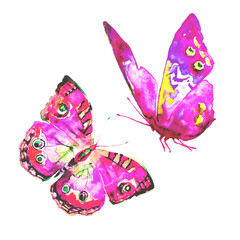 beautiful pink,violet, butterflies, isolated  on a white