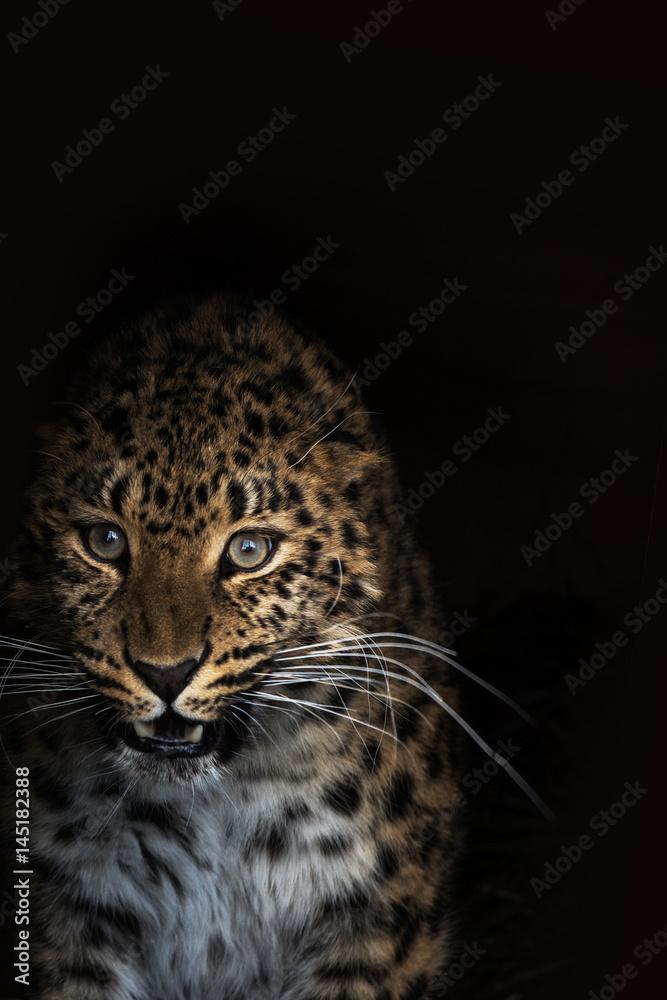 photo sur plexiglas portrait of the leopard nikkel. Black Bedroom Furniture Sets. Home Design Ideas