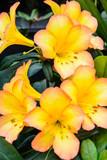 Guzman Flower 5