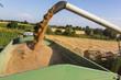 Getreidefeld mit Weizen bei der Ernte - 145210785