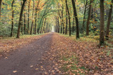Dirt road in autumn deciduous forest.