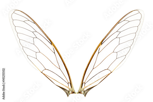 Wings of insect - 145215502