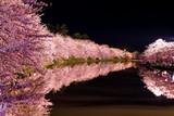 Fototapety 弘前公園の夜桜