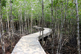 concret bridge pathway at mangrove forest