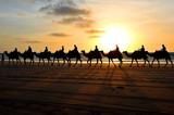 Beach Camel Riding