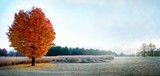 Frosty Fall Morning.. A single bright orange tree in a frosty morning Wisconsin field.