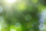 Green blurred backgr...