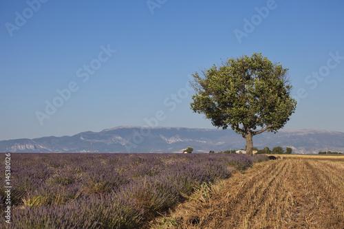 Poster Provence Landschaft, einzelner Baum