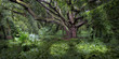 Maui Forest with Beautiful Trees and Lush Vegetation - Hawaii