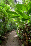 Stone path in rainforest Monteverde Costa Rica