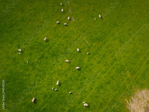 Fotobehang Groene Herd Of Sheep in green field Aerial