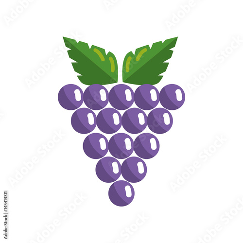 bunch of grapes fruit icon over white background. colorful design. vector illustration