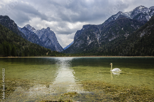 Spring view at Lago Dobbiaco, Dolomites, Lake mountain landcape with Alps peak r Poster