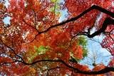 由布院の紅葉