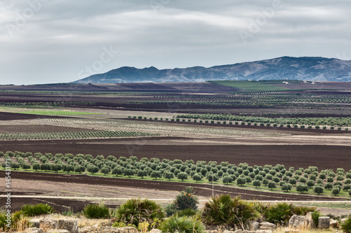 Papiers peints Maroc View at agriculture fields