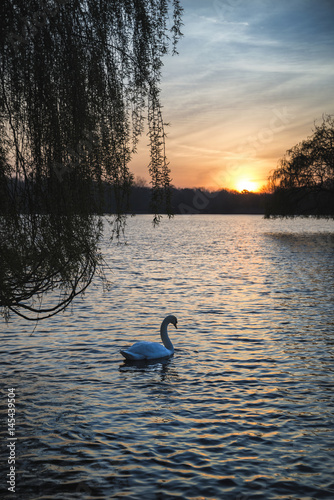 Beautiful vibrant Spring sunrise over calm lake in English countryside Poster