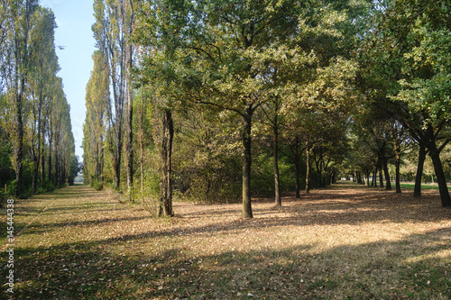 Milan (Italy): Parco Nord at fall Poster