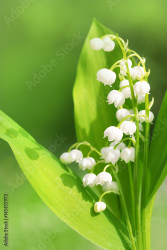 Leinwanddruck Bild Lily of the valley, Maiglöckchen, Textraum, copy space, convallaria majalis