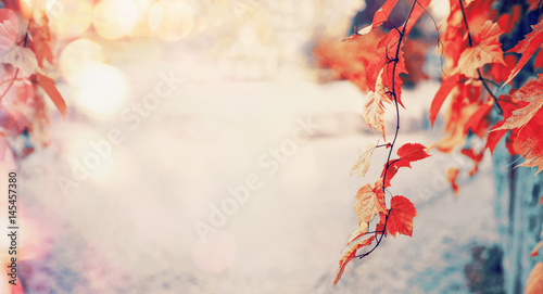Lovely red autumn leaves with sun light and bokeh, outdoor fall nature background, banner