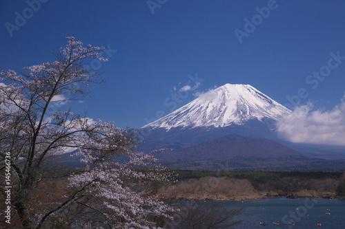湖畔に咲き始めた桜 Poster