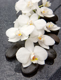 Fototapety Spa stones and white orchid on gray background.