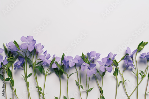 Flowers on a light background - 145471986