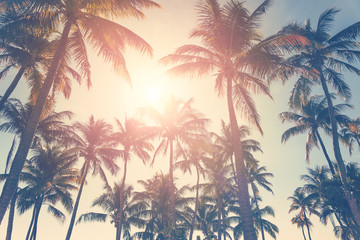 Tropical beach with palm trees and sunny sky