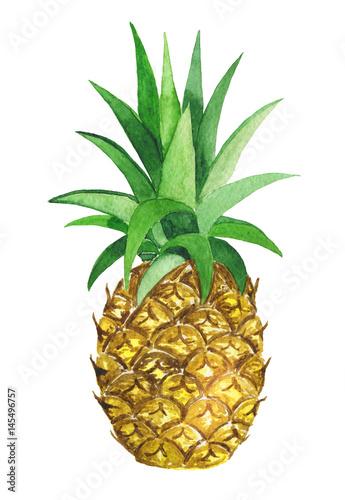 Watercolor pineapple - 145496757