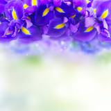 Blue iris flowers border with copy space on blue bokeh background