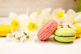 Macarons on white background against of narcissus and cherry blossom