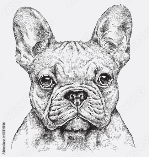 Highly detailed hand drawn French Bulldog vector illustration