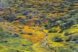 Flower Trail in Diamond Valley Lake, CA - 145511733