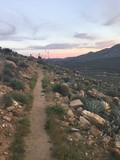 Cacti on Trail