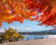 Romantic autumn road