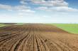plowed field and green wheat landscape spring season